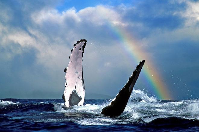 Hawaii Reisezeit Wale