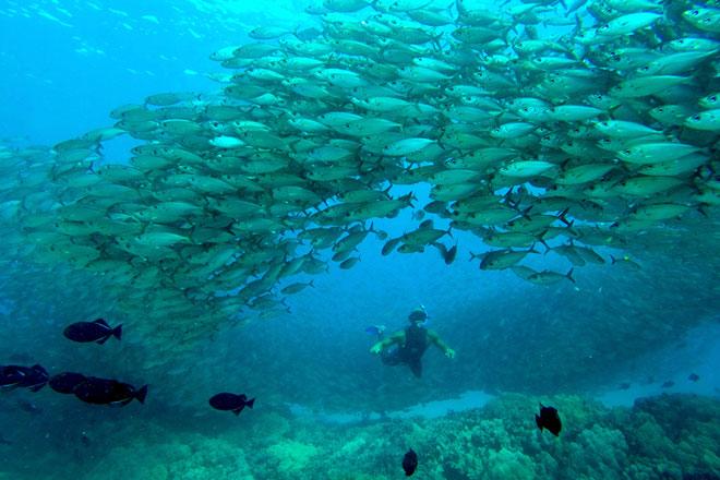 Tauchen auf Hawaii bietet dir ein gigantischen Artenvielfalt von Fischen und Meerestieren