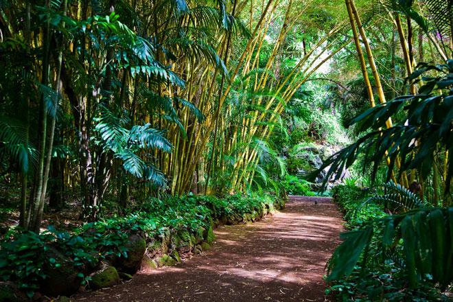 Wandern auf Hawaii